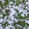 Sneeuwmachine sneeuw huren - Partytentverhuur Nederland